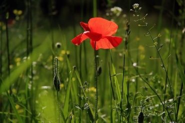 Tips voor korting op tuinartikelen.