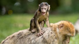 Met korting naar Burgers Zoo