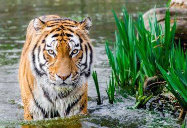 Korting op je dierentuin kaartjes